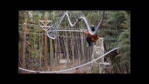 Eine Zipline-Achterbahn in Aktion | WTF | Was is hier eigentlich los?