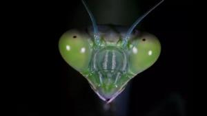 Insektenköpfe von ganz, ganz nah | Awesome | Was is hier eigentlich los?