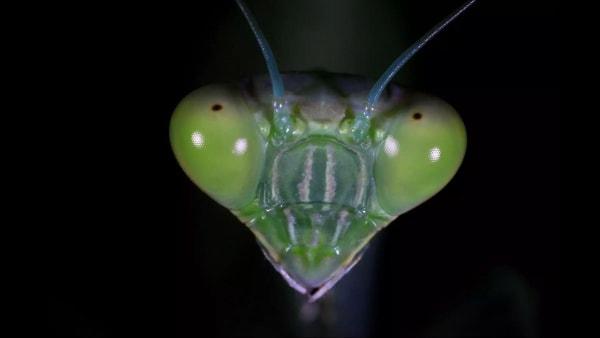 Insektenköpfe von ganz, ganz nah | Awesome | Was is hier eigentlich los? | wihel.de