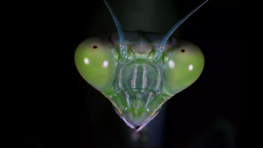 Insektenköpfe von ganz, ganz nah   Awesome   Was is hier eigentlich los?