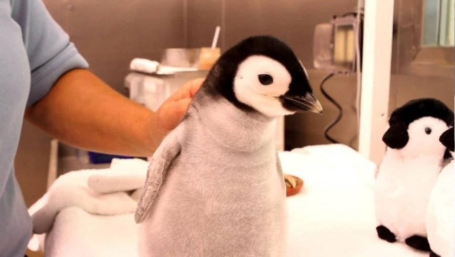 Pinguine – Die besten Tiere der Welt (auch als Kindertier) | Mädchenkram | Was is hier eigentlich los?