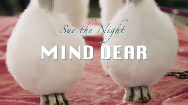 Sue the Night - Mind Dear | Musik | Was is hier eigentlich los? | wihel.de