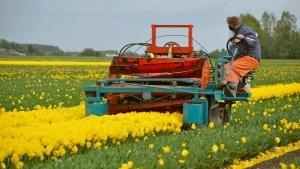 Tulpenkoppen - Klingt blutiger als es ist | Handwerk | Was is hier eigentlich los? | wihel.de