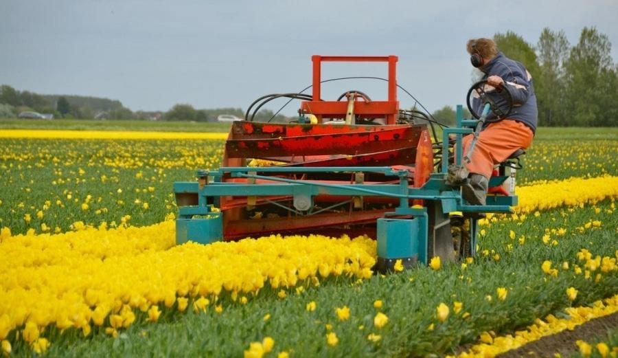 Tulpenkoppen - Klingt blutiger als es ist | Handwerk | Was is hier eigentlich los?