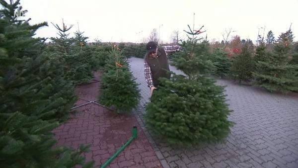 250.000 Weihnachtsbäume - Wie geht das? | Menschen | Was is hier eigentlich los?