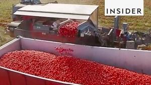 Eine Tomaten-Nach-Farbe-Sortier-Maschine | Gadgets | Was is hier eigentlich los? | wihel.de