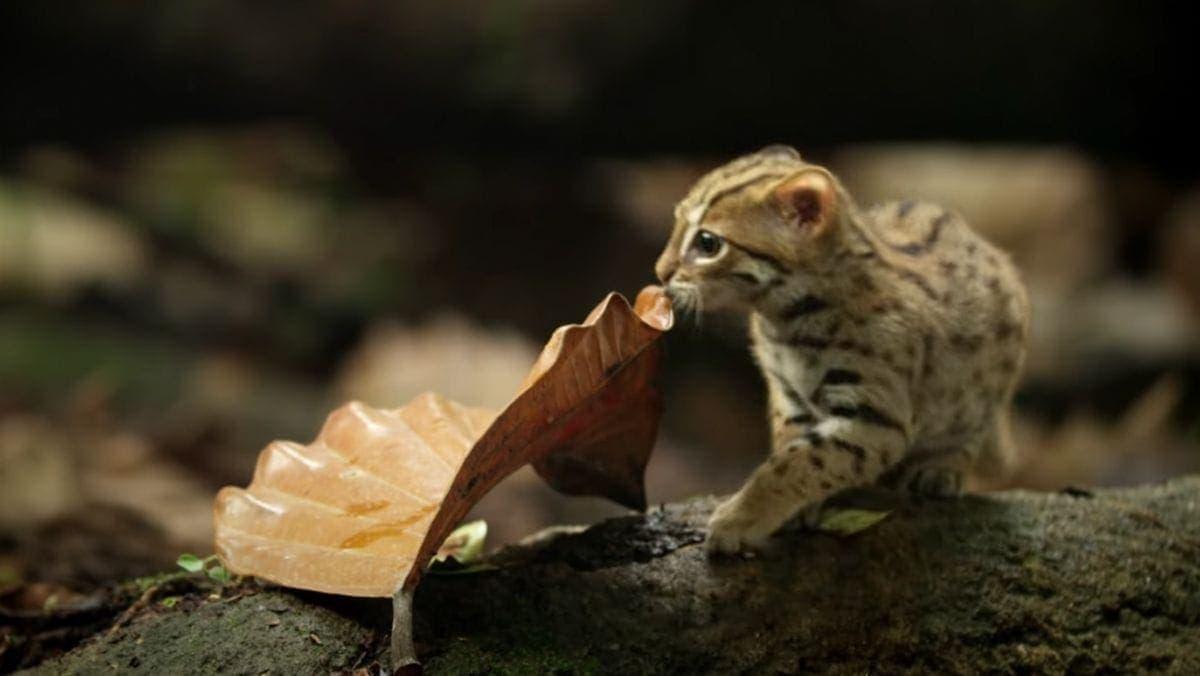 Cat-Content in der Miniaturversion: eine Rostkatze | Mädchenkram | Was is hier eigentlich los?