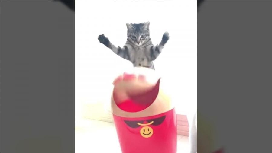 Cat-Content: Wenn eine Katze auf einen Mülleimer trifft | Mädchenkram | Was is hier eigentlich los?