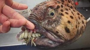 Gruselige Seeungeheuer, gefangen von Roman Fedortstov | WTF | Was is hier eigentlich los? | wihel.de