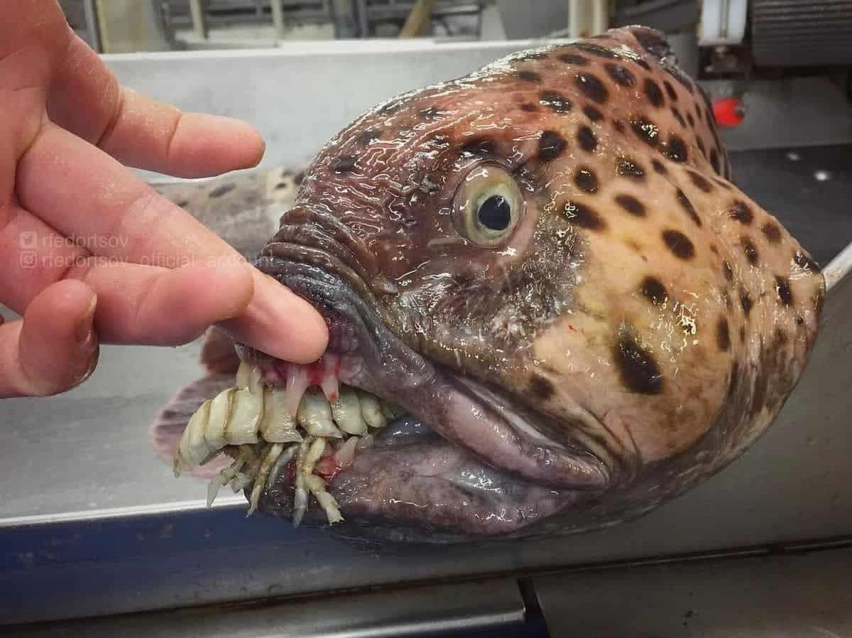 Gruselige Seeungeheuer, gefangen von Roman Fedortstov | WTF | Was is hier eigentlich los?