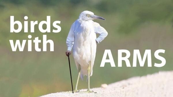 Vögel mit Armen | Lustiges | Was is hier eigentlich los? | wihel.de