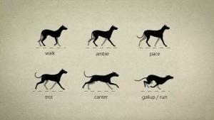 Animation: Wie Hunde eigentlich laufen | Animation | Was is hier eigentlich los?