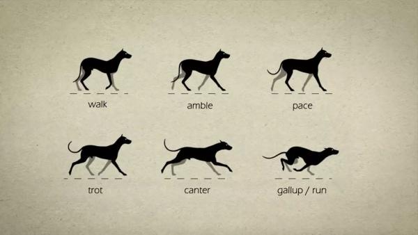 Animation: Wie Hunde eigentlich laufen | Animation | Was is hier eigentlich los? | wihel.de