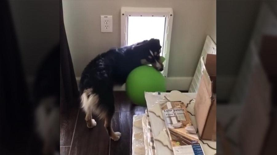 Ein Hund, der am Leben scheitert. Und an der Hundeklappe | Lustiges | Was is hier eigentlich los?
