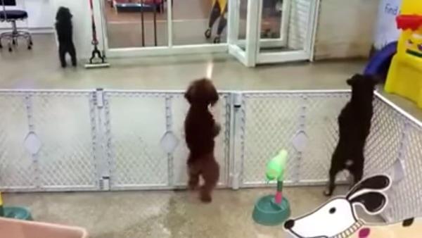 Einfach nur ein Hund, der sich auf sein Herrchen freut | Lustiges | Was is hier eigentlich los? | wihel.de