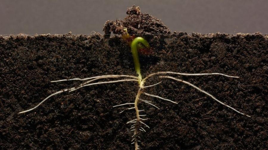 Eine Bohnenpflanze beim Wachsen zusehen | Was gelernt | Was is hier eigentlich los?