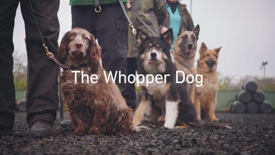 Geschmack für alle Sinne - Vorhang auf für den WHOPPER® Dog   sponsored Posts   Was is hier eigentlich los?