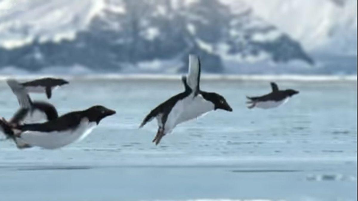 Pinguine können doch fliegen! | Was gelernt | Was is hier eigentlich los?