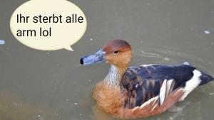 Spektakulär: ein seltenes Bild einer Riesterr-Ente | Lustiges | Was is hier eigentlich los?