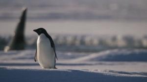 Trailer: Penguins | Kino/TV | Was is hier eigentlich los? | wihel.de