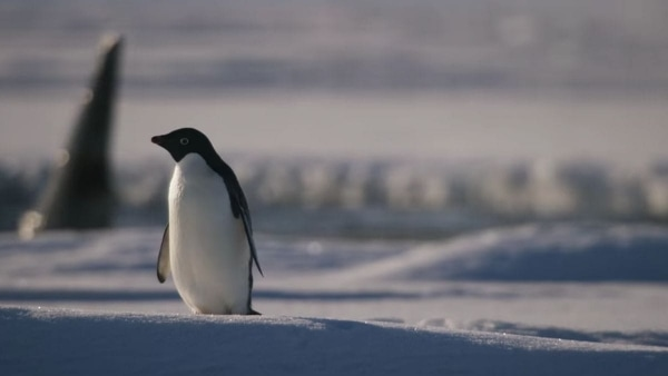 Trailer: Penguins | Kino/TV | Was is hier eigentlich los?