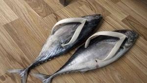 Der Trend für diesen Sommer: Forellen-Flip Flops | Lustiges | Was is hier eigentlich los? | wihel.de