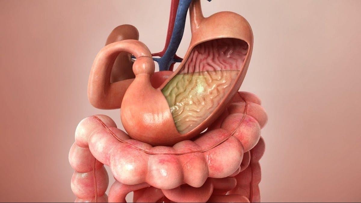 Die Reise einer Aspirintablette durch den Körper | Was gelernt | Was is hier eigentlich los?