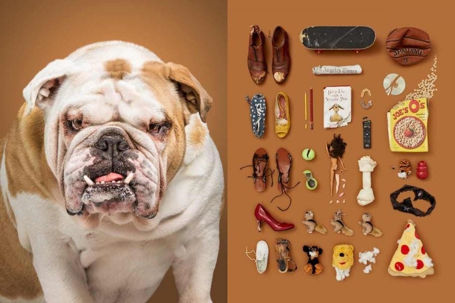 Hunde und ihr Lieblingszeug fotografiert von Alicia Rius | Fotografie | Was is hier eigentlich los?