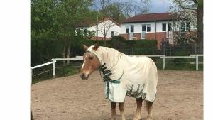 Jetzt tragen sogar schon Pferde Burkas | Lustiges | Was is hier eigentlich los?