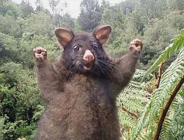 Positive Energie vom positiven Opossum | Lustiges | Was is hier eigentlich los? | wihel.de