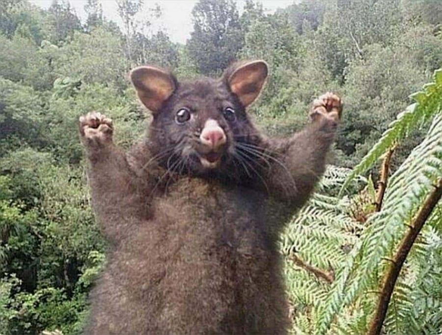Positive Energie vom positiven Opossum | Lustiges | Was is hier eigentlich los?