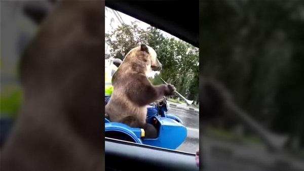 Was man im russischen Straßenverkehr so vorfindet | WTF | Was is hier eigentlich los? | wihel.de