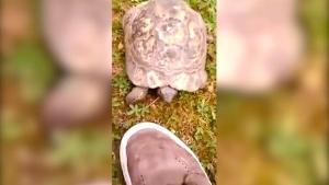 Die Krawall-Schildkröte | Lustiges | Was is hier eigentlich los?