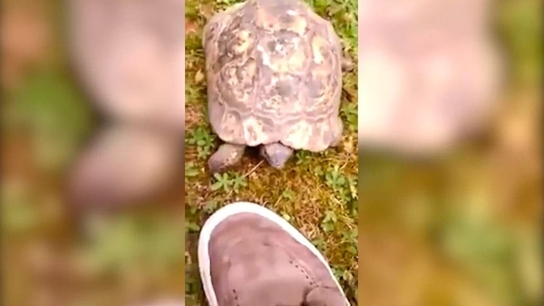 Die Krawall-Schildkröte   Lustiges   Was is hier eigentlich los?   wihel.de