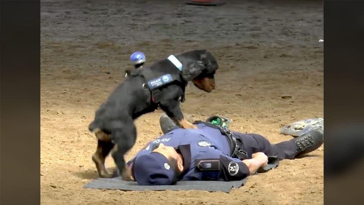 Ein Polizei-Hund, der erste Hilfe kann | Awesome | Was is hier eigentlich los?