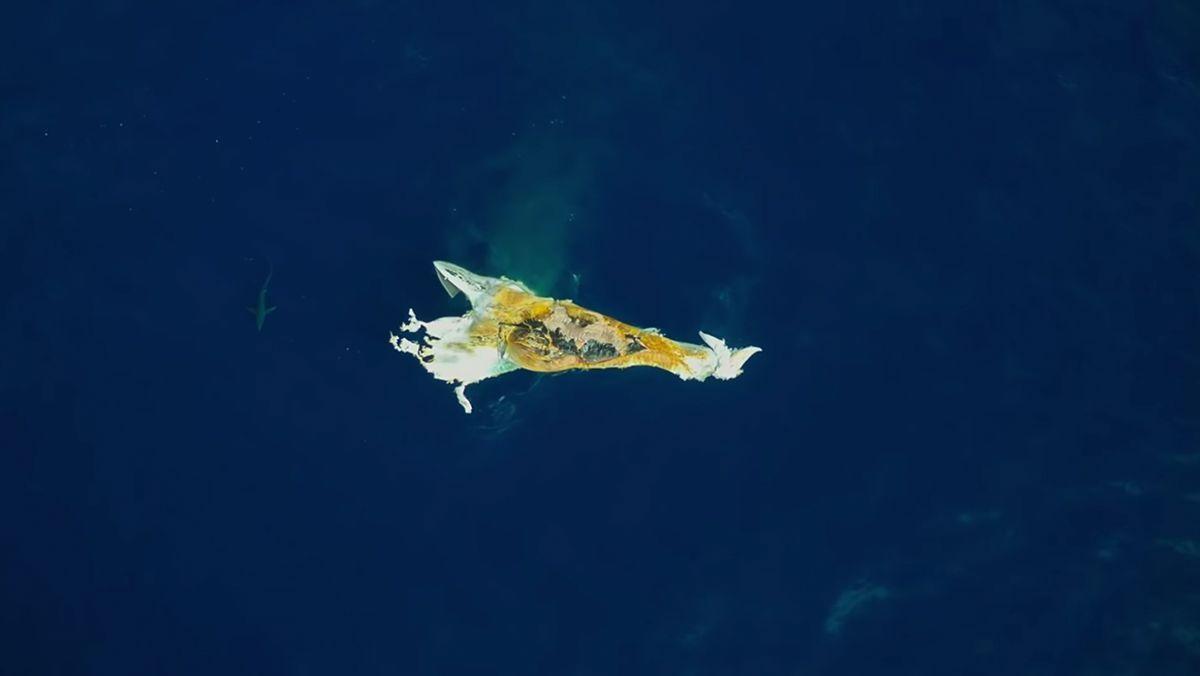 Was passiert, nachdem ein Wal gestorben ist | Was gelernt | Was is hier eigentlich los?