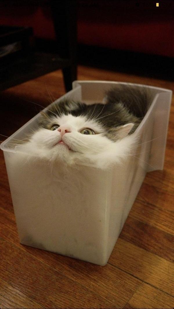 Woran man sieht, dass es zu warm ist: Die Katzen schmilzen | Lustiges | Was is hier eigentlich los? | wihel.de
