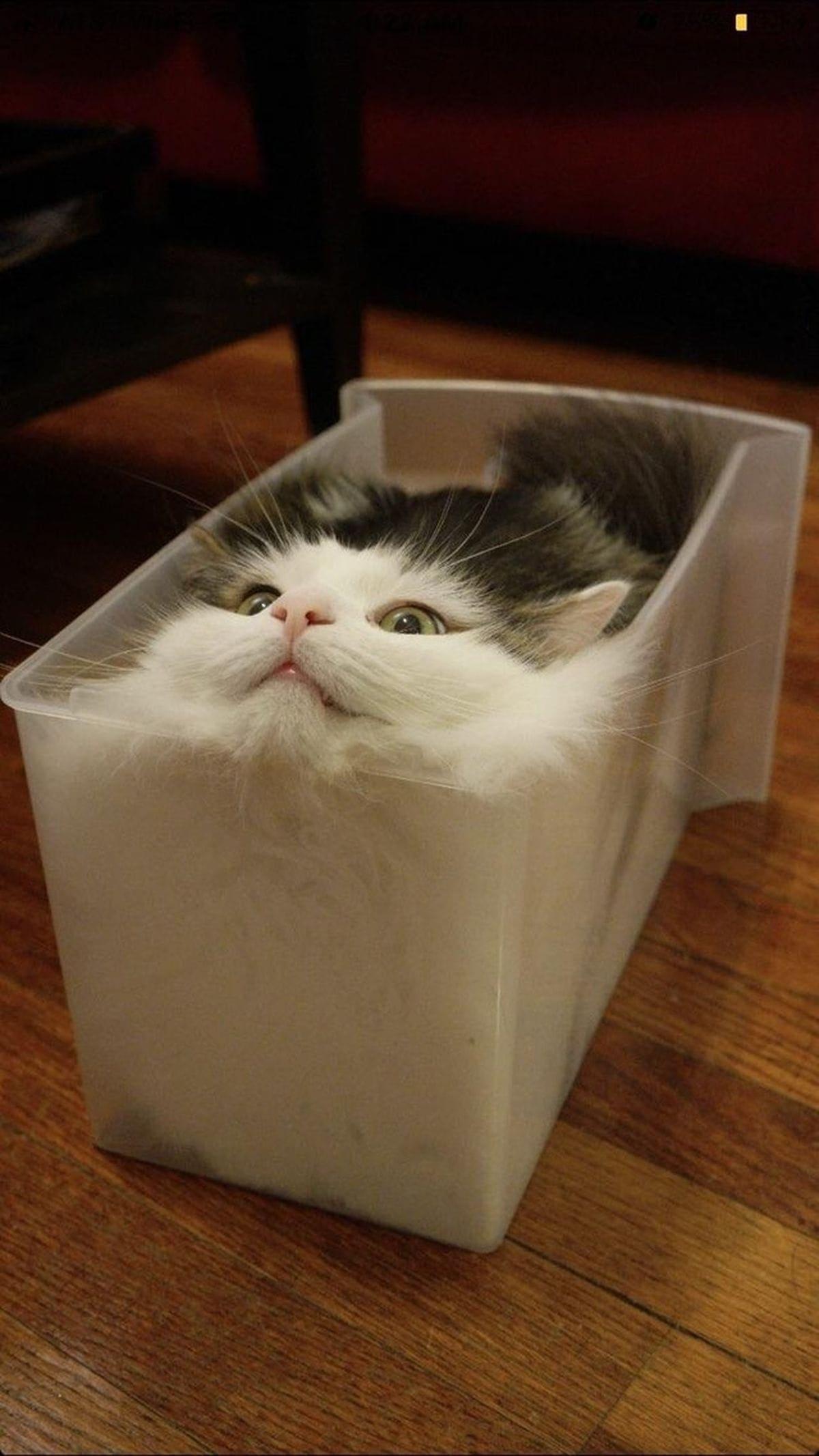 Woran man sieht, dass es zu warm ist: Die Katzen schmilzen | Lustiges | Was is hier eigentlich los?
