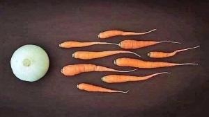 Wie Veganer entstehen | Lustiges | Was is hier eigentlich los?