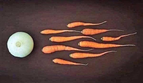 Wie Veganer entstehen | Lustiges | Was is hier eigentlich los? | wihel.de