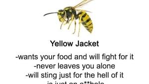 Ein kleiner Leitfaden zu Bienen, Wespen und Co. | Was gelernt | Was is hier eigentlich los? | wihel.de