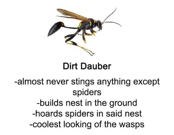 Ein kleiner Leitfaden zu Bienen, Wespen und Co. | Was gelernt | Was is hier eigentlich los?