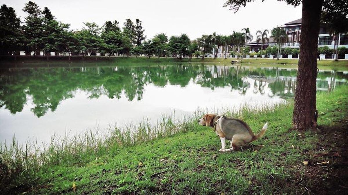 Kalenderempfehlung für 2019 – Kackende Hunde | Lustiges | Was is hier eigentlich los?