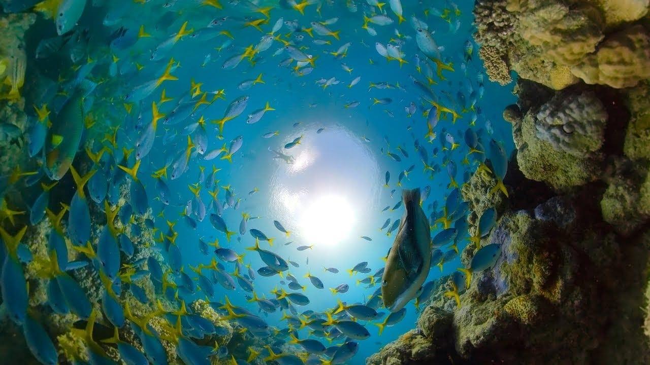 Einmal fix durchs Great Barrier Reef getaucht | Travel | Was is hier eigentlich los?