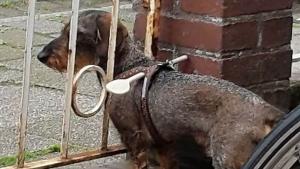 Geniale Idee für Hundebesitzer: Eine simple Weglaufsperre | Lustiges | Was is hier eigentlich los? | wihel.de
