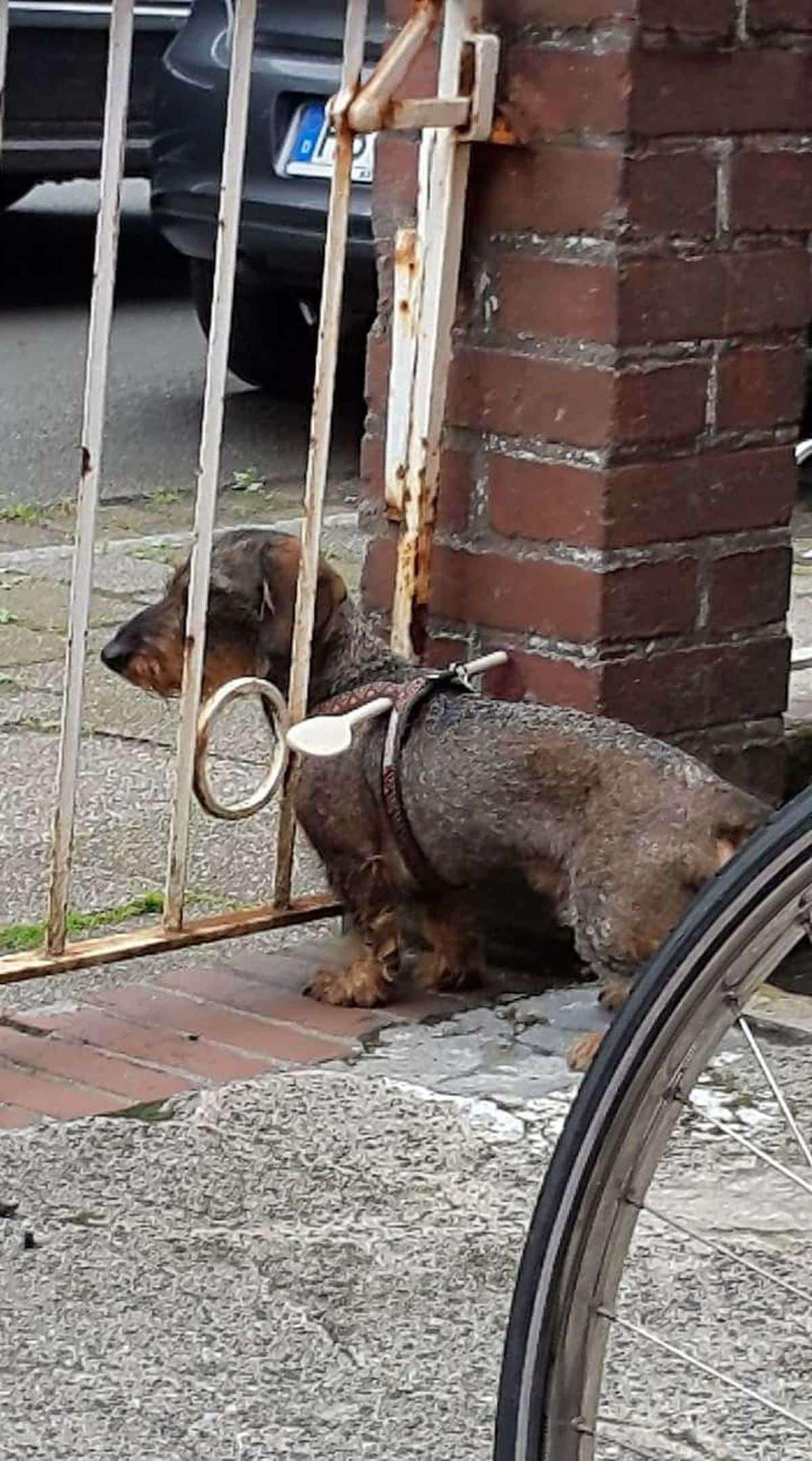 Geniale Idee für Hundebesitzer: Eine simple Weglaufsperre | Lustiges | Was is hier eigentlich los?