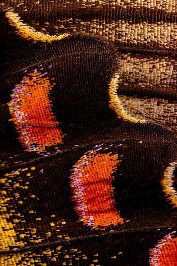 Makro-Fotografie von Schmetterlingsflügeln von Chris Perani | Fotografie | Was is hier eigentlich los? | wihel.de