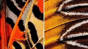 Makro-Fotografie von Schmetterlingsflügeln von Chris Perani | Fotografie | Was is hier eigentlich los?