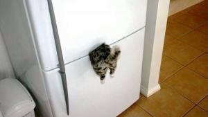 Der vielleicht beste Kühlschrankmagnet der Welt | Lustiges | Was is hier eigentlich los?