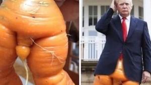Donald Trump und eine Karotte haben mehr gemeinsam als nur die Farbe | Lustiges | Was is hier eigentlich los? | wihel.de